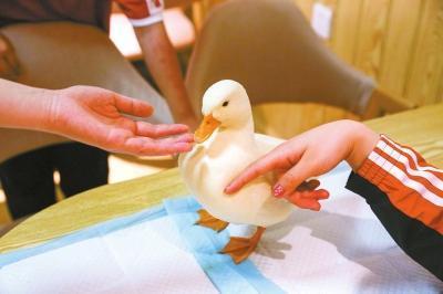 郑州咖啡馆引进单价近万的网红鸭 是收获流量